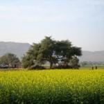 Serene Village Life